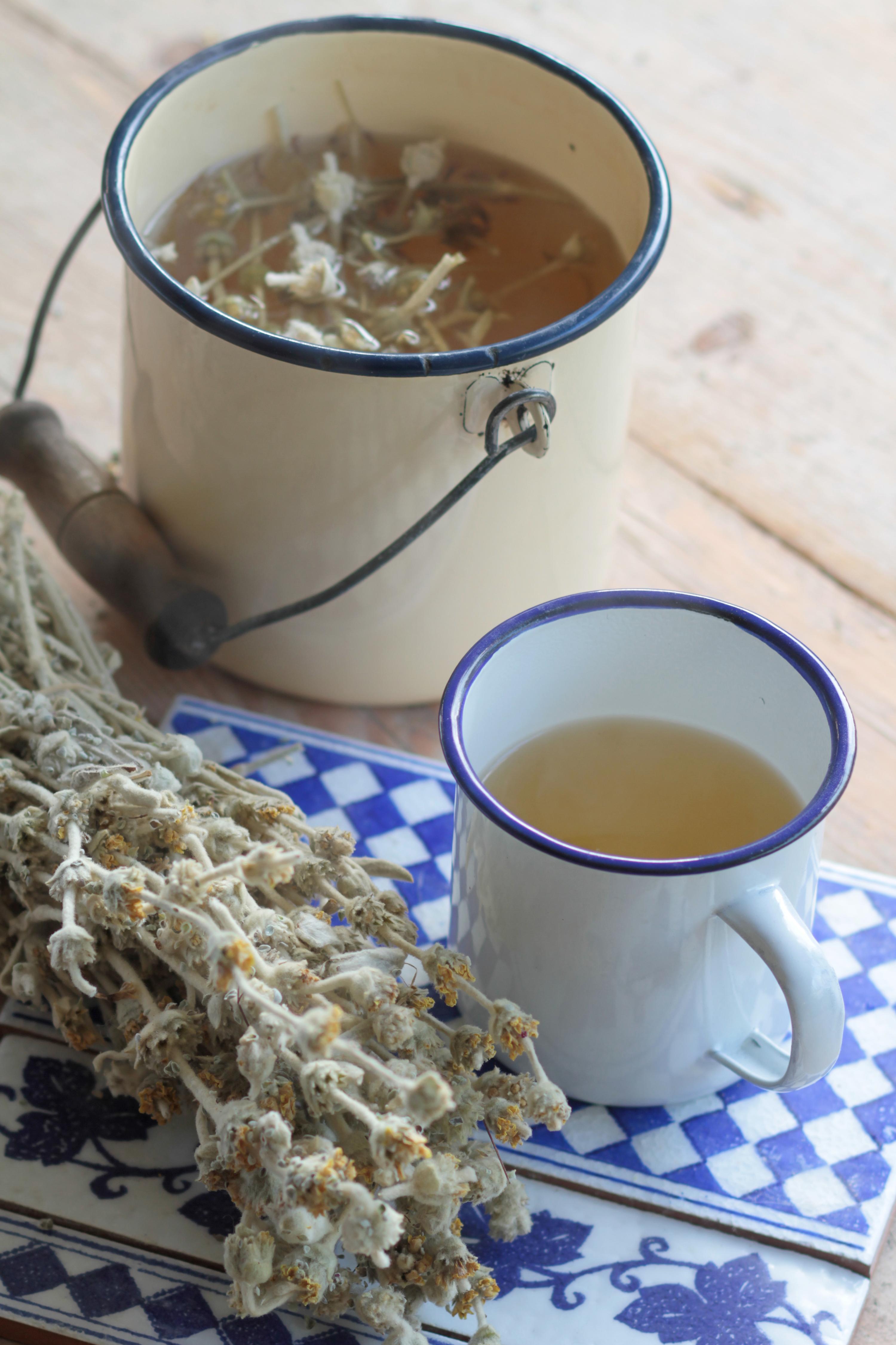 trà núi ikaria