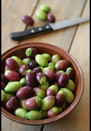 olives-just-picked