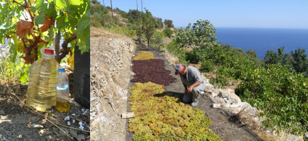 Wood ash solution and raisin grapes laid out to dry on a breezy slope.