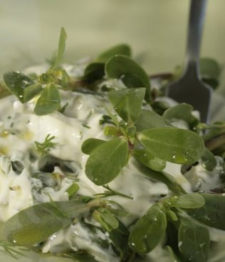 Tzatziki with Purslane, Cucumbers and Herbs
